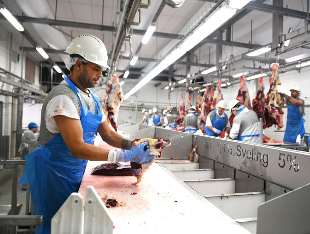 SKIFTE: Store aktører går inn med 60 millioner kroner i Gudbrandsdal slakteri AS, som dermed er et skritt nærmere industrietablering.