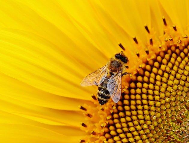 LEVEKÅR: – De grønne takene er viktige leveområder for humler, bier og andre insekter, påpeker Venstre.