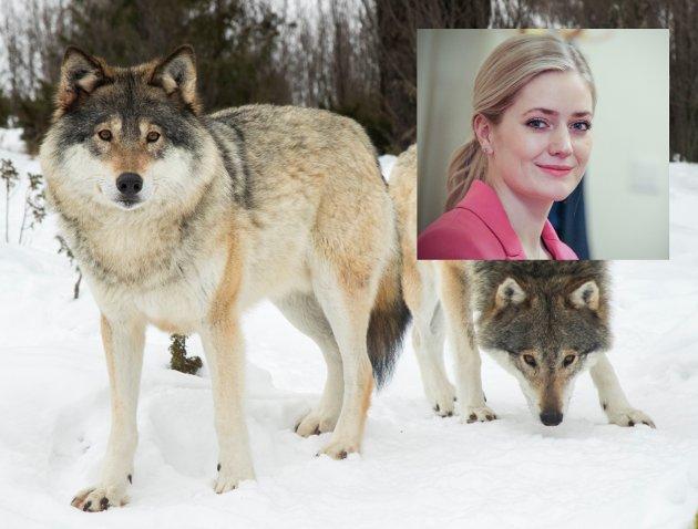MARKERING: Emilie Enger Mehls ønske om reduserte bestandsmål, er urealistisk.Foto hovedbilde: NTB