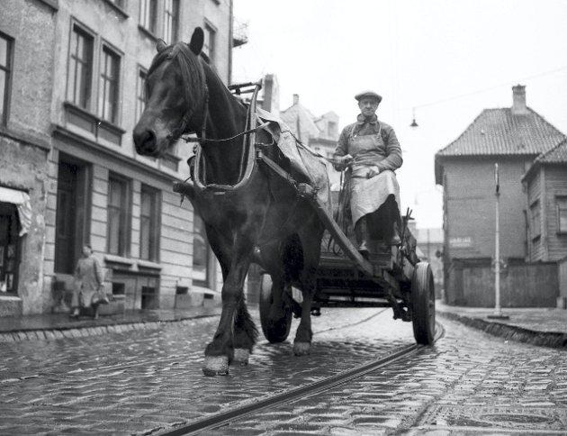 Hester var i bruk i Bergen godt inn på 1900-tallet. Dette bildet fra BAs fotoarkiv, datert 1954, viser den siste bosshesten i Bergen.  FOTO: BA