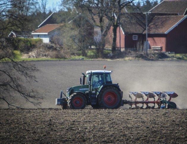Levende landbruk: – Det er fullt mulig å få ned klimautslipp fra jordbruket uten å redusere bruken av matjorda, svekke distriktene eller redusere antall norske beitedyr, skriver bondelagsleder Lars Petter Bartnes.