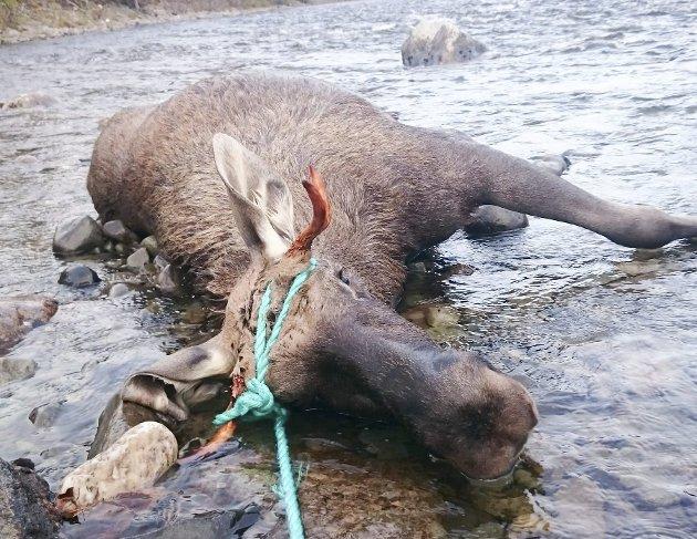 LIDELSE: NOAH mener dyr er medskapninger som må tas større hensyn til. ILLUSTRASJONSFOTO