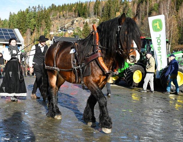 Stav 2021: Opptog med hester, kusker og ryttere.