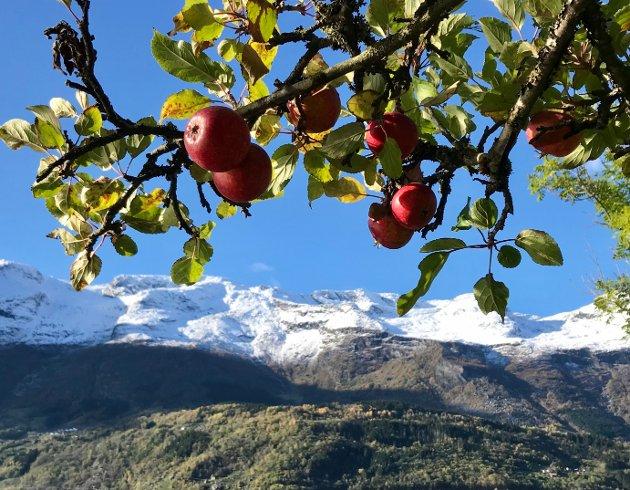 Siste rest av hausten heng på trea og vinteren er komen i fjellet..