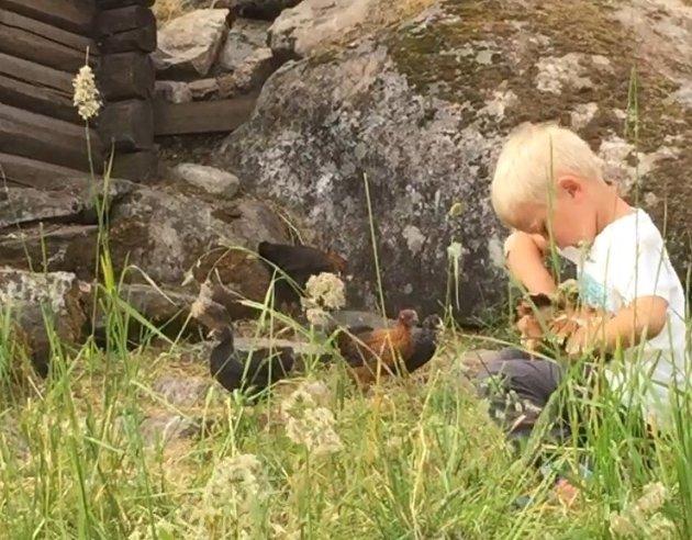 Om barn og høns...