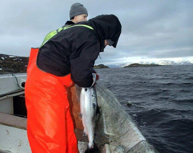 SJØLAKSEFIKSE: Astrid Daniloff mener sjølaksefiske bør bli mer prioritert. .Foto: Alf Helge Jensen