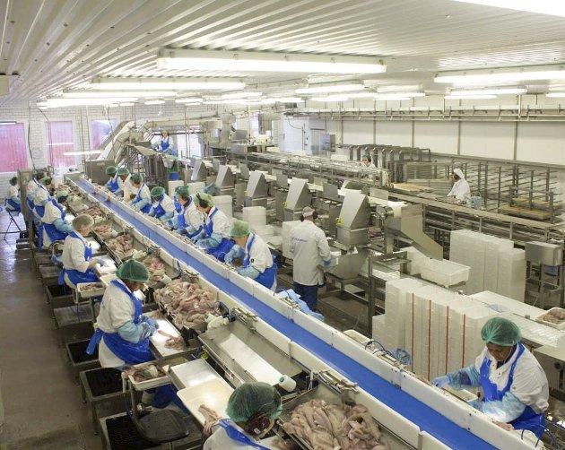 FULL PRODUKSJON: Ferskfiskordningen gjør at de 85 ansatte på Båtsfjordbruket har arbeid nok i disse dager. Her fra filetproduksjonen. Derfor var det en gledens dag da ordningen ble utvidet.