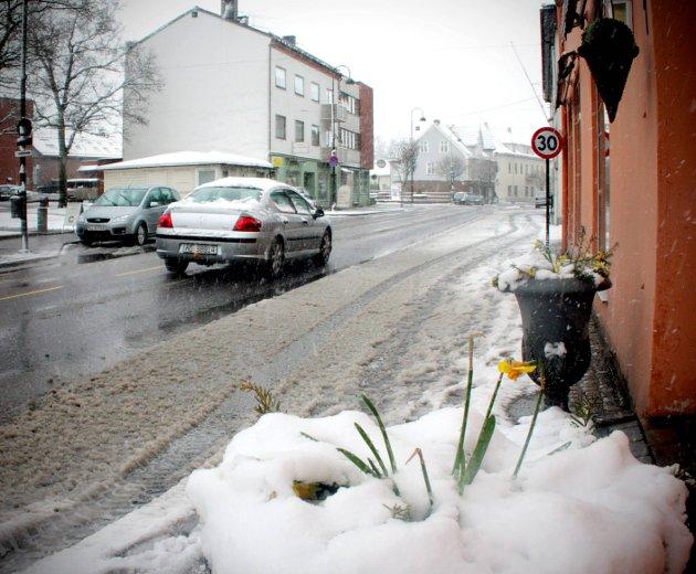 Overraskende: Snøen kom overraskende for blomsten i gata i 2010.