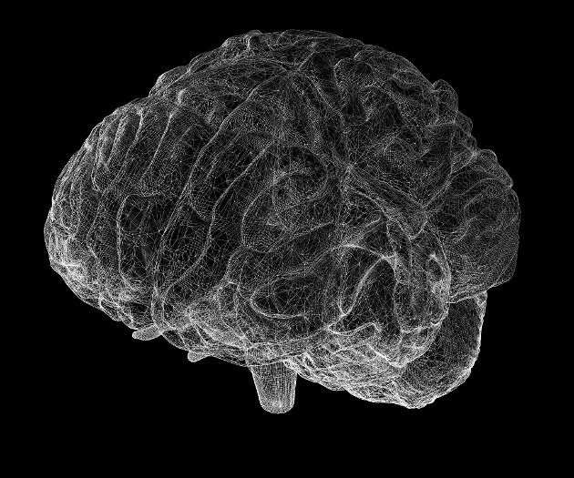 HJERNEMODELL: Vi er langt frå å kunne lage noko som fungerer like dynamisk som vår hjerne. Og då skjønar vi også at vi forstår relativt lite av all den kommunikasjonen som går føre seg i hjernen, skriv Asbjørn Geithus.