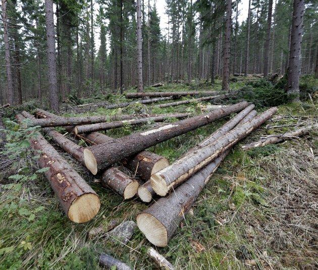Tømmer: «Glommen Skogs aktivitet i Østfold sysselsetter en rekke personer gjennom skogens verdikjede, eksempelvis er en rekke skogsentreprenørlag løpende engasjert og påfølgende tømmer-transportører. Dette er også en del av vårt samfunnsansvar», skriver Gudbrand Kvaal, skogeier og tillitsvalgt i Glommen Skog SA – region Havass, i dette innlegget.