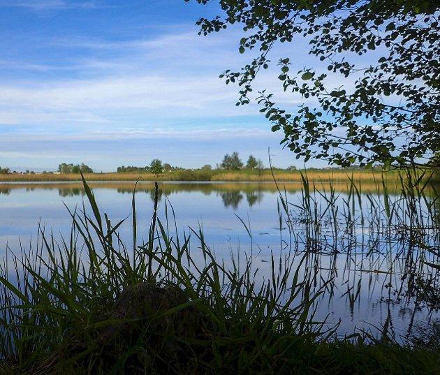 Nabbetorpdammene: Slik ser det ut ved Nordre og Søndre grav om sommeren.foto: Kai-Edvard Rønning