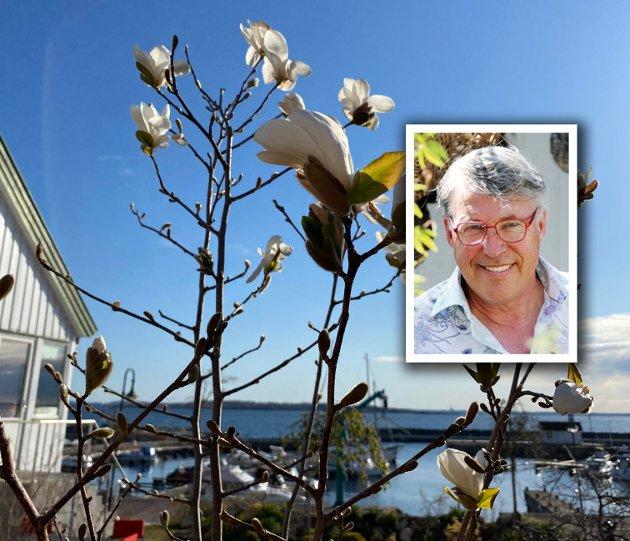 «Her kom siste bedet nå. Det er en ren tribute til de som passerer smetten. En Magnolia-lund i prosess, ved huset», skriver Finn Schjøll.