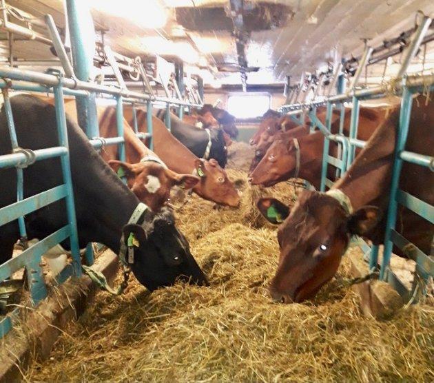 IMPORT: - I 2020 importerte vi mer landbruksprodukter enn noen gang. Den stadig økende importen holder prisene på storfekjøtt nede. Dersom Nortura setter opp prisen til den norske bonden, mister varene fort konkurransekraft mot importerte produkter, skriver leder Elisabeth Gjems i Innlandet Bondelag.