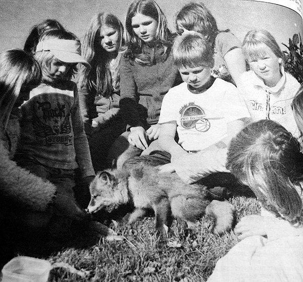 Beboerne i Legdaveien på Gravdal fikk  et høyst uvanlig besøk. Til barnas store glede hadde en liten revunge trukket inn i boligfeltet på jakt etter mat. Barna flokket seg rundt reven som var på besøk og ga den grillpølse, sild og vann.