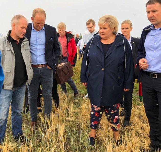 SIKRE VERDIER: Vi ikke har råd til å miste arbeidsplasser og trygg mat, skriver innsenderen. Her er statsminister Erna Solberg (H) på gårsbesøk sist onsdag på Kløfta for å se på en av årets kornavlinger som har tørket vekk. FOTO: TOM GUSTAVSEN
