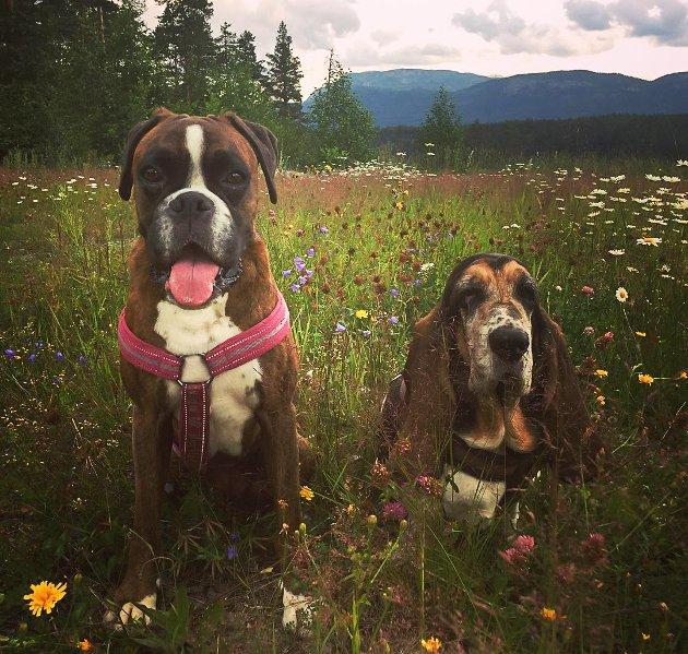 VINNER NR 1: Vi falt for dette litt drømmende bildet av Sophia og Tussi i blomsterenga, som Torunn Wølner har sendt inn til Telens sommerfotokonkurranse. Jentene ser ut til å ha det helt utmerket med tur i fine omgivelser. Fotografen vinner en lunsj for to - gavekortet kan hentes i Telens redaksjon.