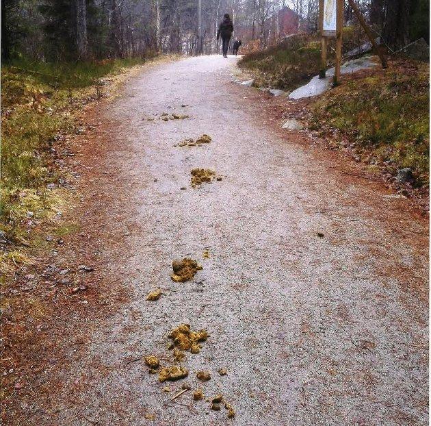 «Bildebevis»: Hestemøkk i  løypa er lite populært for dem med barnevogner og har barn som går med, fastslår Per Kolstad. (Innsendt bilde)