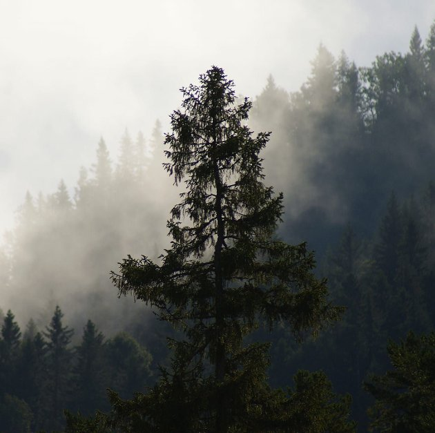 STEMNING: Trolsk stemning på Krokskogen. – Et sted for ro og fred, jakt og fiske, skriver Preben L. Johannessen.