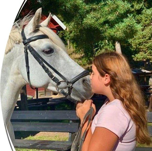 her ser dere at hester er kjempe snille dyr!