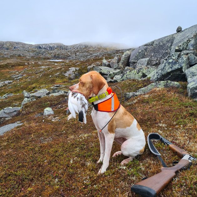 RYPEJAKT I HAUGFJELL: Leserbrevskribenten frykter for konsekvensene flere vindmølleparker i Narvik vil gi.
