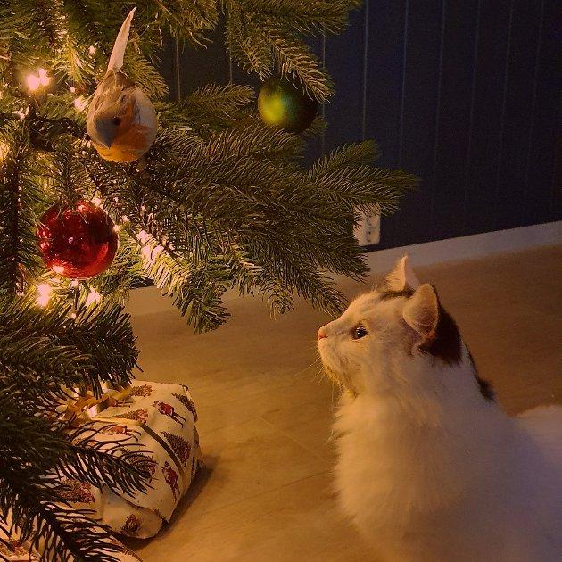 Pusekatten til Malene gleder seg nok til jul.
