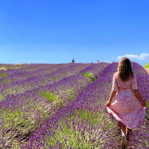 FRANKRIKE: Fra et av favorittstedene, lavendelåkrene i det franske distriktet Valensole.