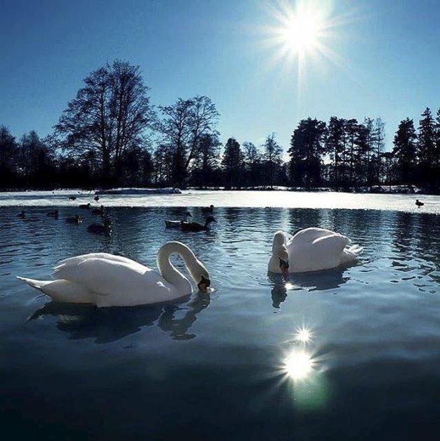 Svanekos: Håvard Flaatten har vært i Bugårdsparken og tatt dette flotte bildet. Flatten blir ukevinner