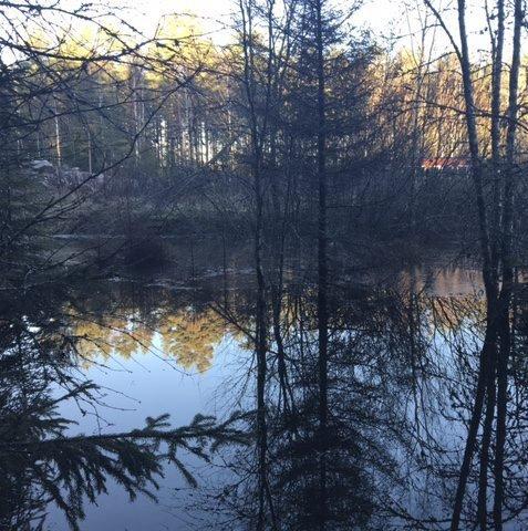 En stor dam har dukket opp i Kalnes-/Visterskogen. Hvem har anlagt den, og hva er planen for arbeidet som skjer i området, spør Päivi Hilska i dette innlegget. (Foto: Privat)