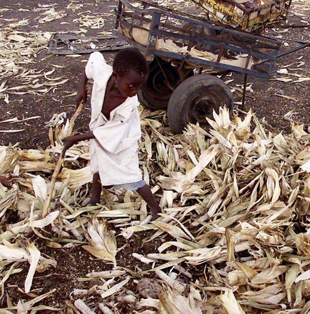 Lite mat: Afrikansk gutt leter etter mais, men finner ikke noe.Illustrasjonsfoto: NTB scanpix