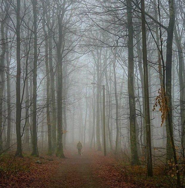 Bøkeskogen: Vårtåke i Bøkeskogen er et flott motiv som er fanget av Martin Olsen, som blir ukesvinner med dette bildet.