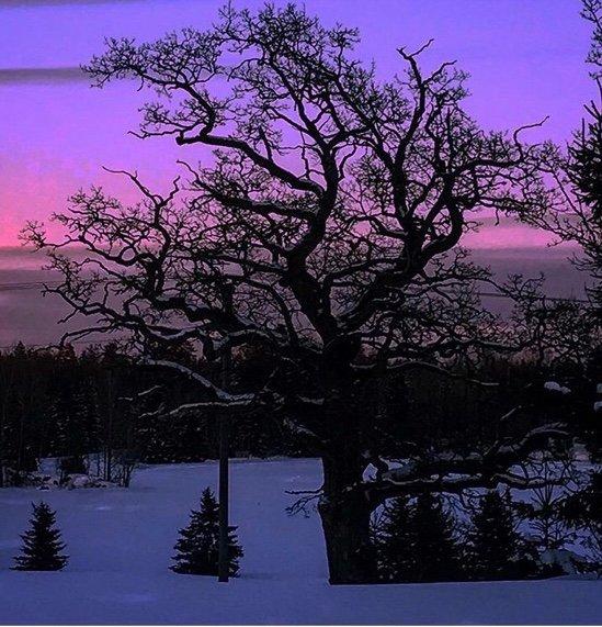 Wenche Loge har sendt to bilder av sin favoritteik i  Agnorveien på Fagerstrand, her er bilde 1.