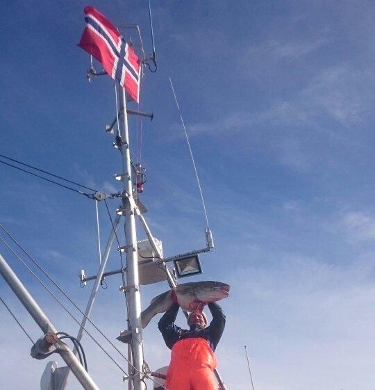 """OPPDATERT: 14.APRIL 2018 Lofotposten har i mange ti-år delt ut ett kilo kaffe til alle som får en torsk/skrei over 30 kilo, derav navnet kaffetorsk. Her finner du bilder av årets kaffetorsker. VÆRØY: På sesongens siste sjyvær, fredag den 13., fikk skipper Tor Sverre Nikolaisen og mannskap Morten Espeland på linebåten """"Leiskjær"""" denne kaffetorsken på 34 kilo som ble levert til Lofoten Viking AS. Som seg hør og bør skal det flagges når sesongen er over."""