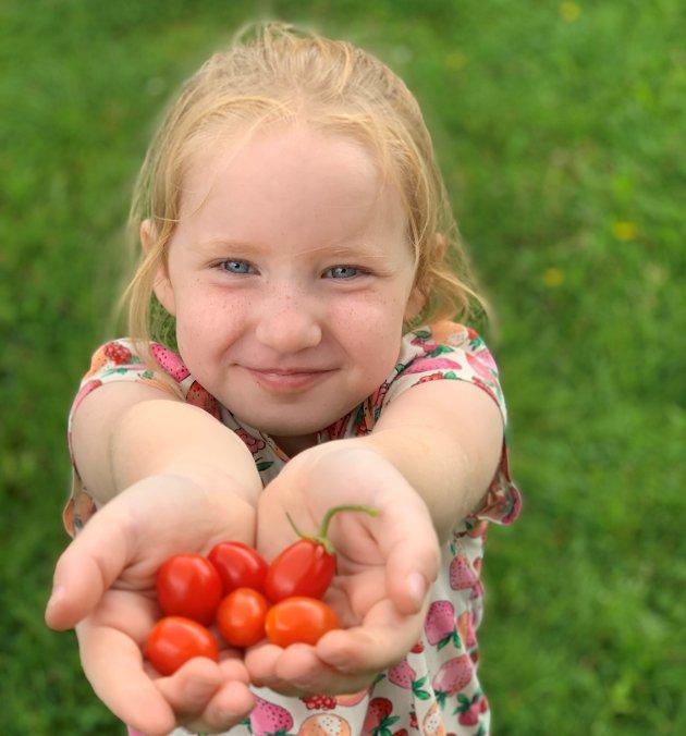 VINNER NR 1: Hånda full av søte tomater, DET er sommer det!