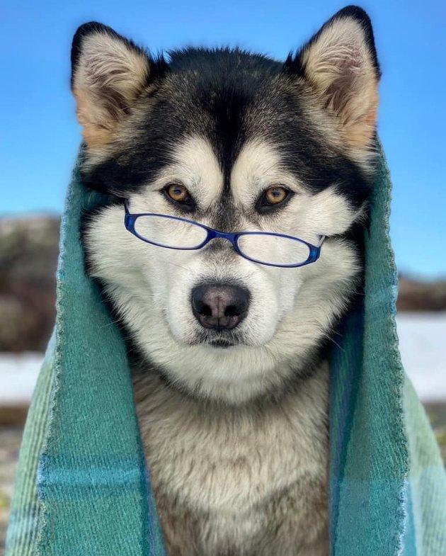 Rebecca Årli Hunsbedt har sendt inn bilde av Maja. Hun forteller at Maja stiller gjerne opp som modell og er en tålmodig og fotogen hund.