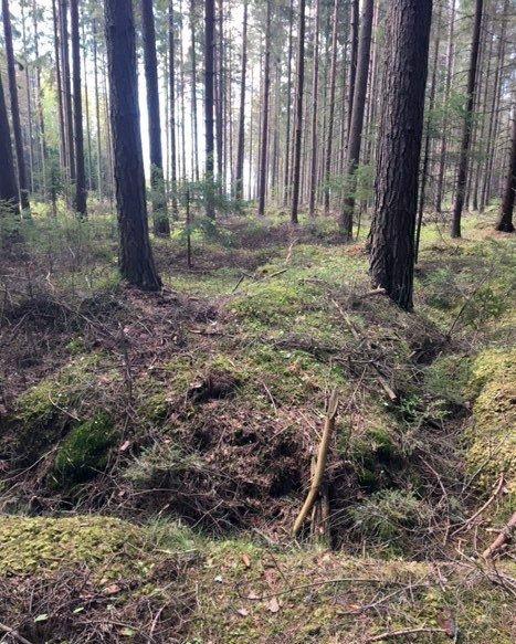 Det er sporene etter fire små hustufter som er synlige på vestsiden av Kalnesbrekka. Tyskerne hadde ammunisjonslager her under krigen, forteller Per E. Lundh.