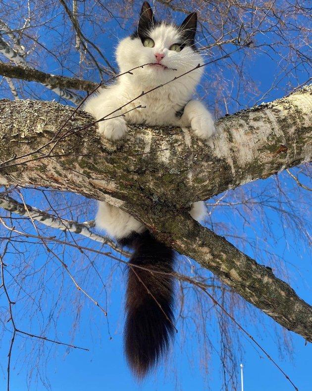 Kattevennen i treet.