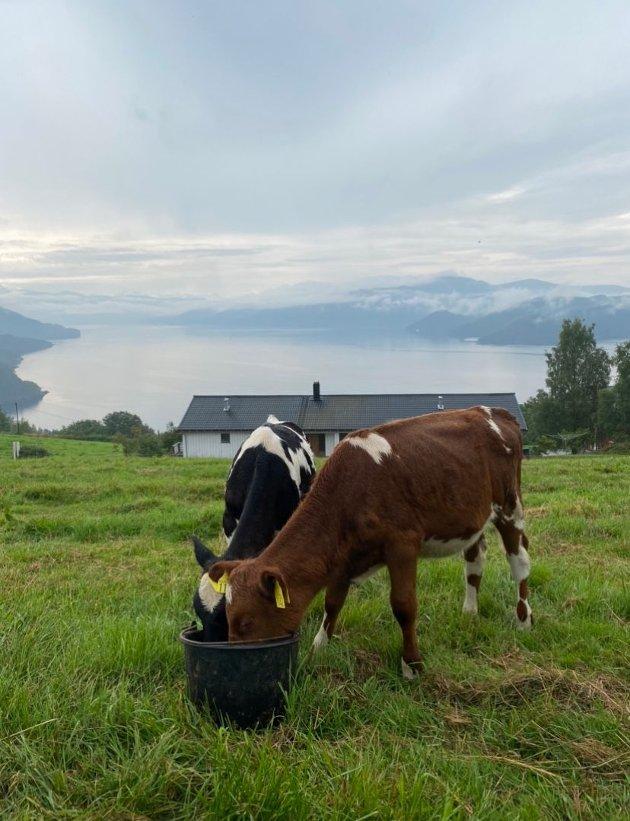 Er Norge verdensmester i Dyrevelferd? Det kan diskuteres, mener innsenderen.