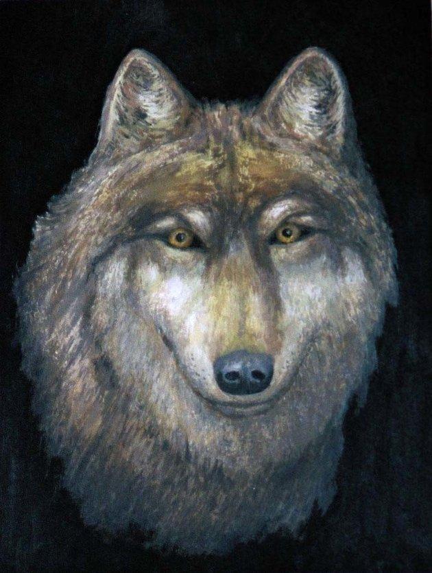 Stopp  jakten på ulvene