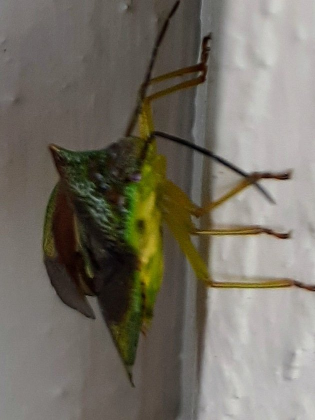 UKJENT: Er det noen som drar kjensel på insektet?