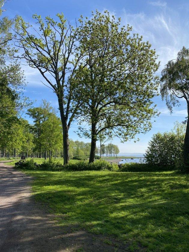 NATUR: Kyststien ved Borre er et stykke vakker natur. Innsenderen advarer mot å bygge naturen ned bit for bit.