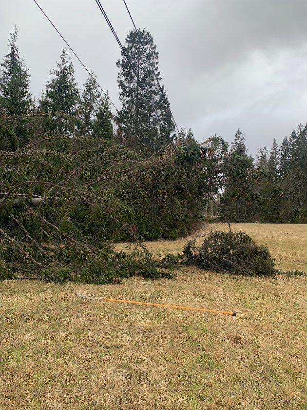 Trefall: Stadig mer ekstremvær med sterk vind og bløt mark gjør strømnettet utsatt.