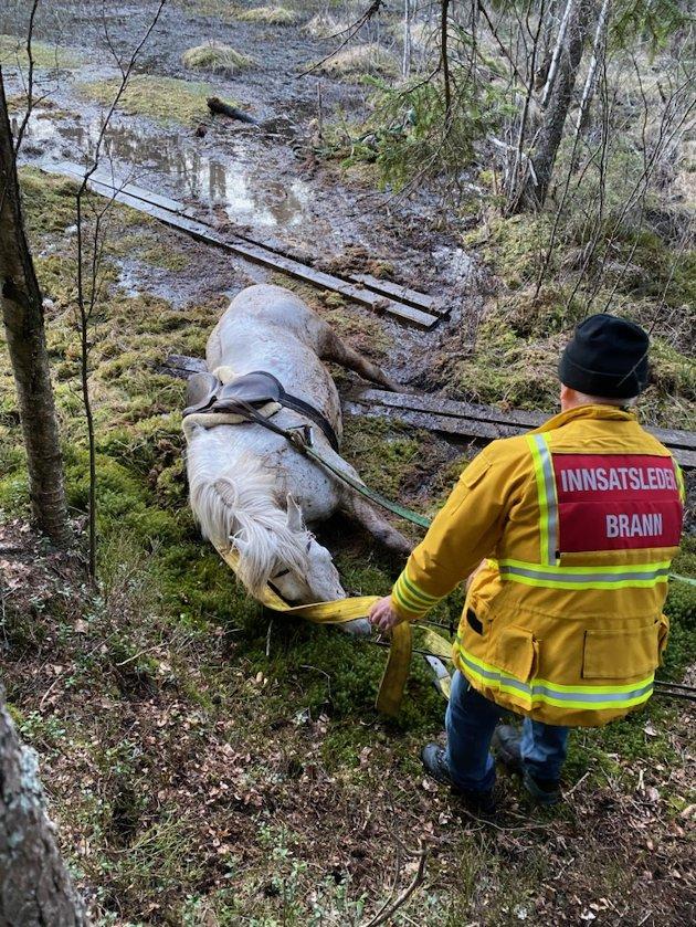 Lang redningsaksjon: Hesten hjelper til og lettelsen er stor for innsatsleder Ørnulf Hagen når han ser at Bork kommer på trygg grunn.
