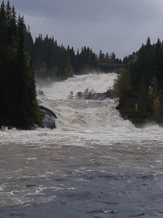 Oversvømmelse i Svartebikta i Korgen og Sjøforsen med mye vann