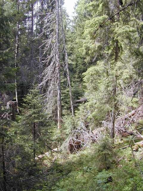 Mange sjeldne arter i Norge er ikke globalt truet!