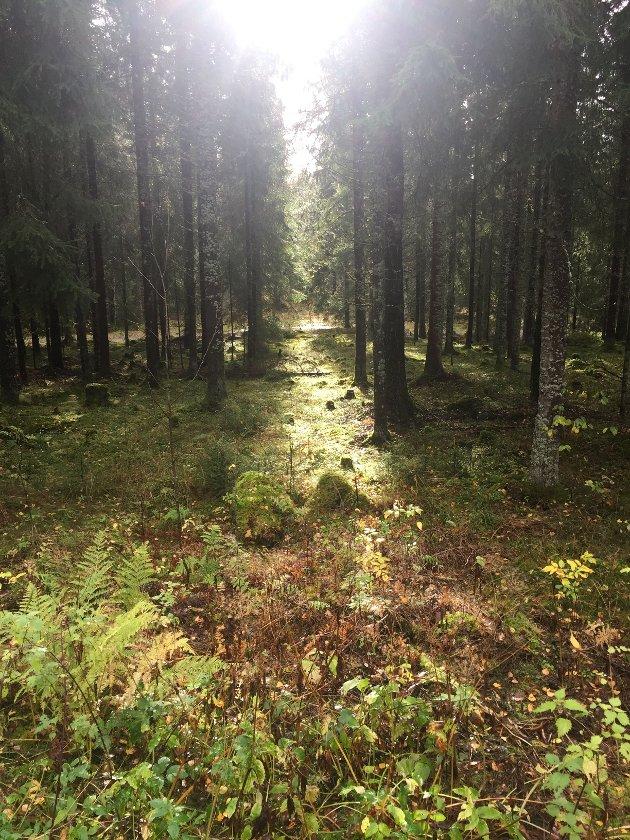 I de fleste andre land i Europa «som vi liker å sammenligne oss med», kan man ikke engang felle trær i egen hage uten tillatelse., skriver innsender