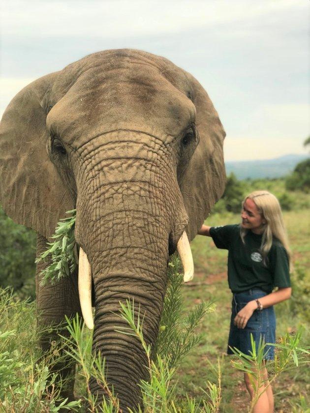 IKKE TIL Å RI PÅ: Tenkt deg om to ganger før du bruker elefanten som transportmiddel. Betaler du for en tur støtter du direkte den makabre behandlingen av dyret.