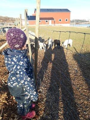 Lille Anna beskuer sitt eget svarte lam. Det skal hete Kembo, sier han.