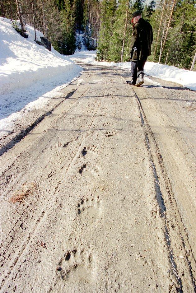 UTE AV HIET: Deisjøbamsen våknet til liv igjen etter en lang vinter i de varme aprildagene i 1996. Han satte igjen tydelige spor etter seg i veien oppover fra søre Lomsdalssetra, og begynte vandringen på Veståsen i Søndre Land.