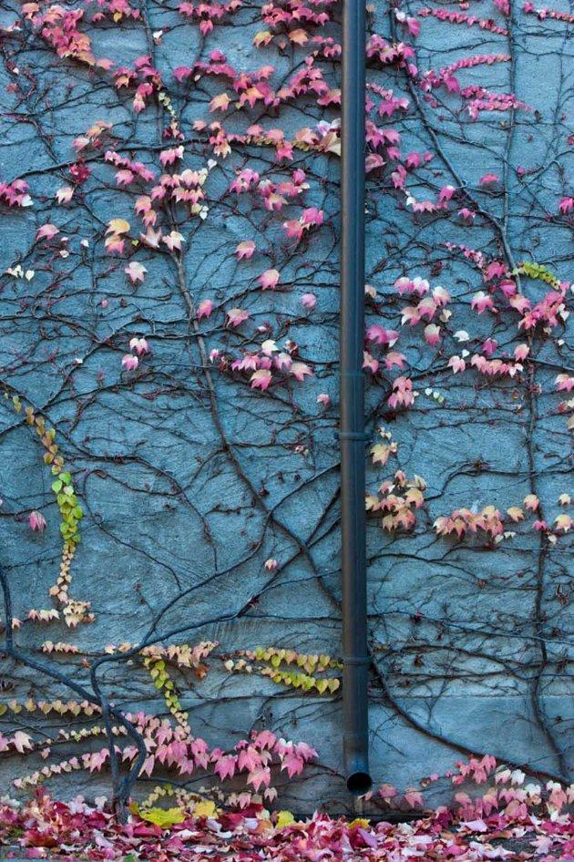 Høst fra en bygård i Oslo.