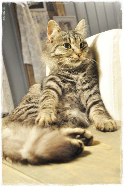 UTE PÅ VIFT: Jannes katt har latt seg forføre.